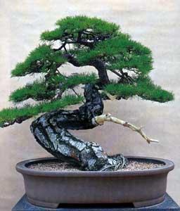 bonsai08.jpg